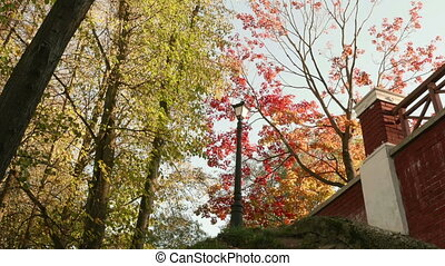 Colorful autumn daytime. Smooth dolly shot
