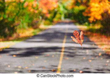 Colorful Autumn Fall Nature