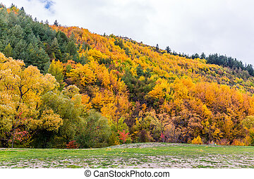 Colorful autumn foliage and green pine trees in Arrowtown