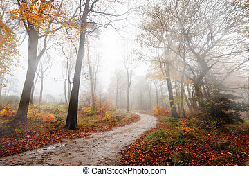 Colorful autumn forest in the autumn
