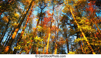 Colorful autumn forest scenery