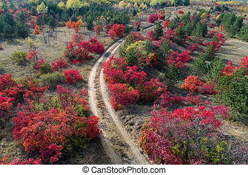 Colorful autumn forest shoot from drone - Aerial image of...