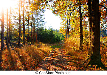 Colorful autumn forest with sun rays through branches of trees.