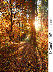 Colorful autumn forest with yellowed leaves in sunset light