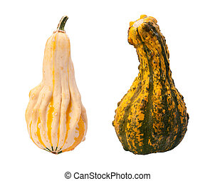 Colorful Autumn Gourds isolated
