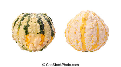 Colorful Autumn Gourds isolated wit