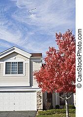 Autumn in Suburbs - Colorful Autumn in Suburbs -...