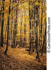 Colorful Autumn In Voderady Beechwood, Czechia