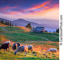 Colorful autumn landscape in mountain village. Sunset