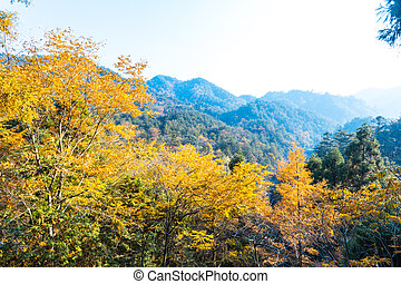 Colorful autumn landscape in mountains