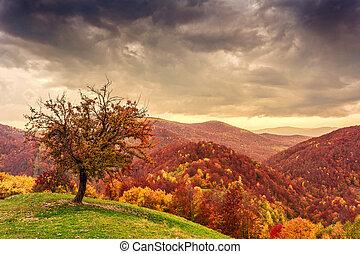 Colorful autumn landscape in the Carpathian mountains