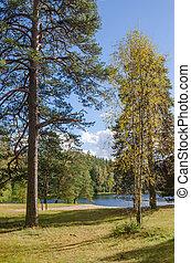 Colorful autumn landscape in the forest lake, Estonia
