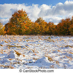 Colorful autumn landscape in the forest