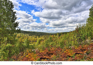 Colorful autumn landscape in the forest.