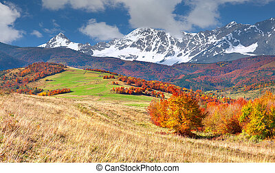 Colorful autumn landscape in the high mountains.