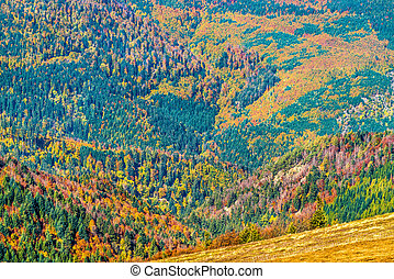 Colorful autumn landscape of the Vosges Mountains in Alsace...