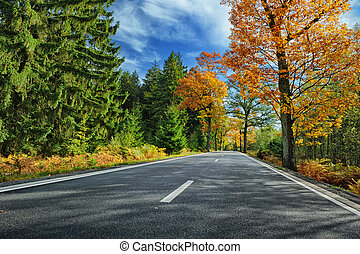 Colorful autumn landscape with road