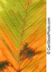 Colorful autumn leaf background. Minimal autumn concept