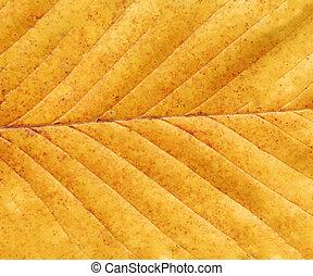 Colorful autumn leaf closeup