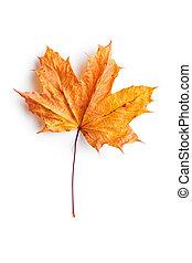 Colorful autumn leaf.