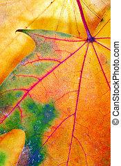 Colorful autumn leaf texture