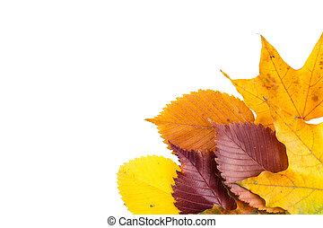 colorful autumn leafs
