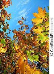 Colorful autumn leaves