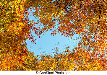 Colorful autumn leaves against blue sky background