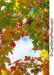 Colorful autumn leaves against the blue sky as background
