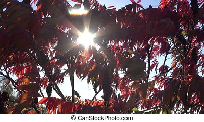 colorful autumn leaves and sunlight