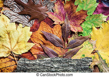 Colorful autumn leaves and tree bark. Seasonal natural background.