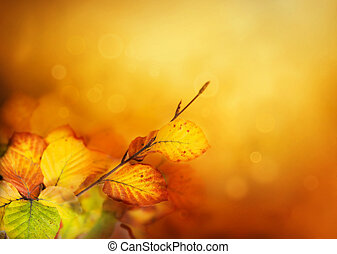 Colorful Autumn leaves background with bokeh lights