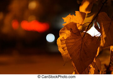 Colorful autumn leaves close up with night illumination