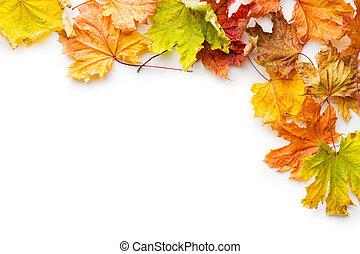 Colorful autumn leaves.