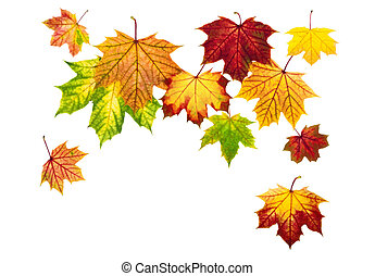 Colorful autumn leaves falling down