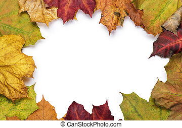 colorful autumn leaves frame with copy space