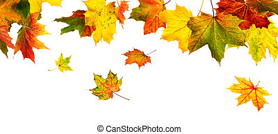 Colorful autumn leaves hanging down on white