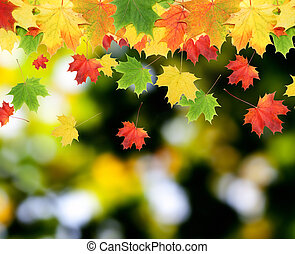 leaves - Colorful autumn leaves in blurred background. ...