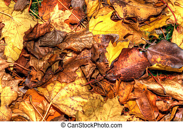Colorful Autumn Leaves in HDR in soft focus
