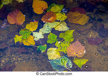 Colorful autumn leaves in the water. The concept of autumn