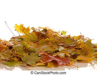 colorful autumn leaves isolated on whited background