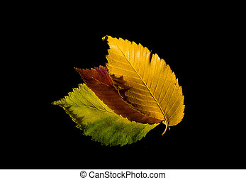 Colorful autumn leaves on black background
