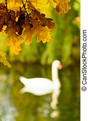 Colorful autumn leaves on the shore of lake illustrate swan silhouette