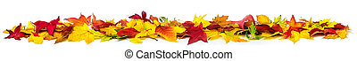 Colorful autumn leaves on white, banner