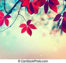Colorful autumn leaves over blurred nature background. Fall