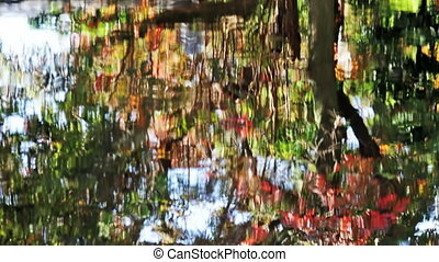 colorful autumn leaves reflecting