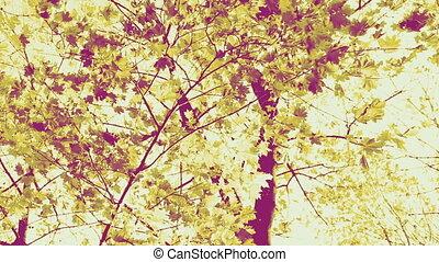 Colorful autumn leaves, sepia tone - Autumn leaves in the...