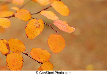 Colorful autumn leaves. Shallow depth of field