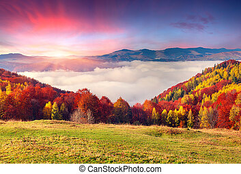 Colorful autumn morning in the Carpathian mountains. ...
