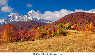 Colorful autumn morning in the high mountains